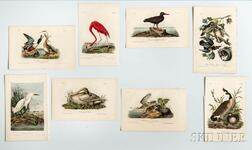 Audubon, John James (1785-1851) Prints from The Birds of North America  , Octavo Edition, Approximately 404 Color Lithographs.