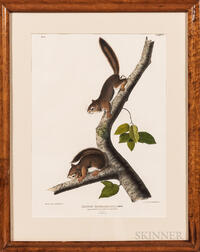 John James Audubon (1785-1851) Richardsons Columbian Squirrel