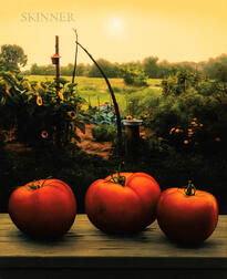 Scott Prior (American, b. 1949)      Tomatoes in Community Garden